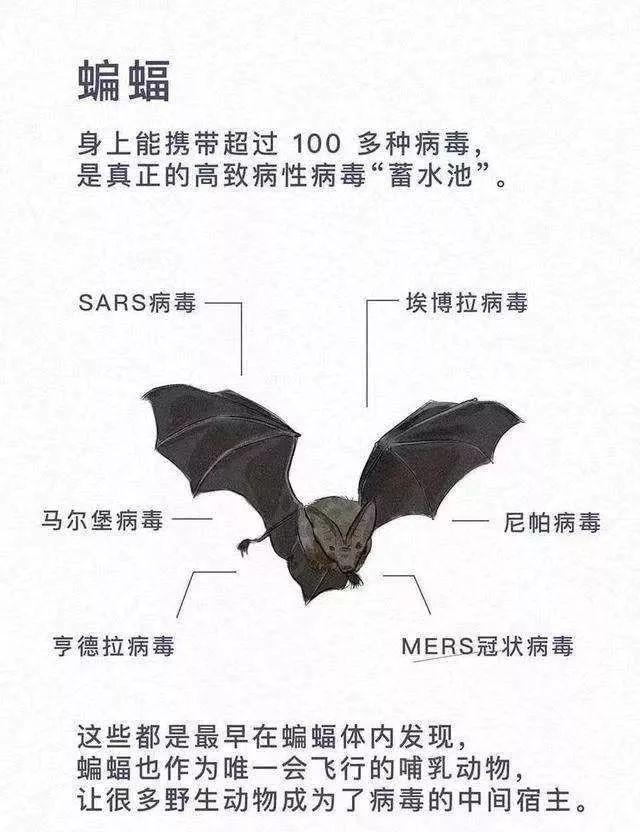 吃蝙蝠,真变态!别让野味玷污中餐!